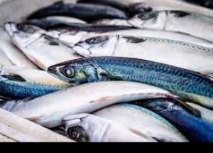 España, primer consumidor de pescado en Europa