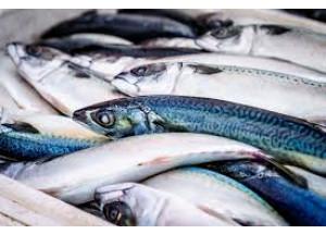Anisakis, ¿cuándo es necesario congelar el pescado?