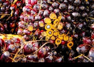 Aceite de palma: la OCU recomienda no abusar de su consumo